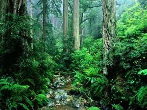 طبیعت2