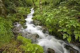 نهرهای بهشت3